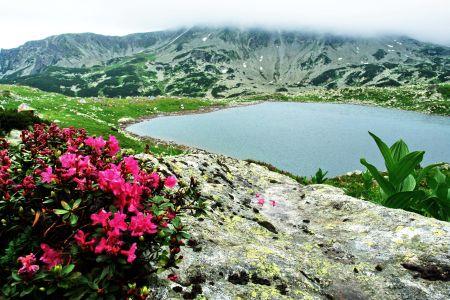 rhododendron-langa-lacul-bucura