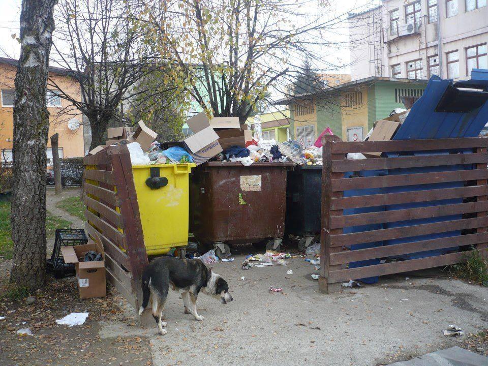 aruncarea gunoiului absolut selectiva
