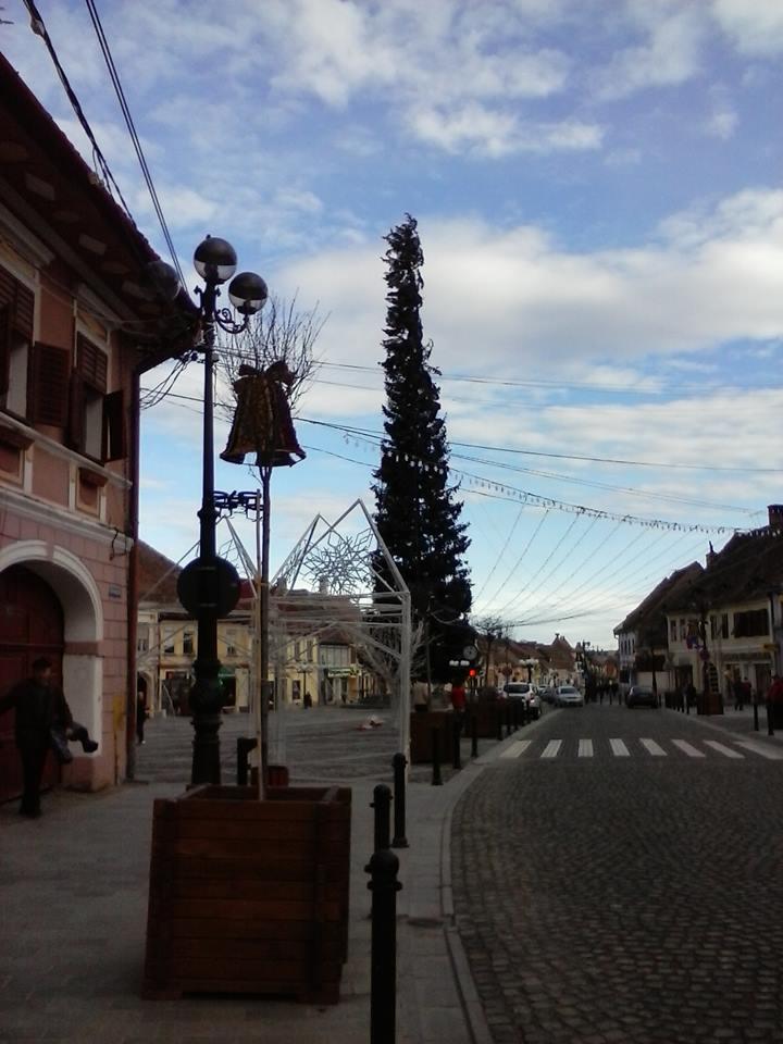 Cel mai ciufulit brad din Romania